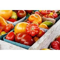 番茄的品種